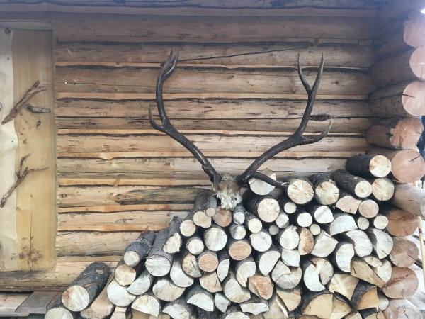 Wapiti-Elk-Cabin